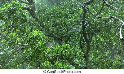 Rain in green rain forrest