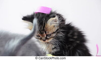 Group of small kittens playing together with paper tinsel