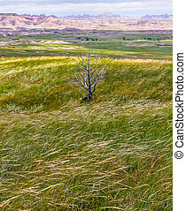 Vistas of Badlands National Park, USA - Grasslands Meet the...