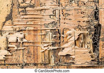 madera, comido, Termitas
