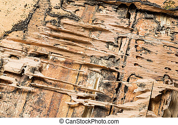 Wood eaten by termites - Damaged wood box eaten by termites...
