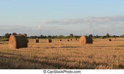 field straw roll bale