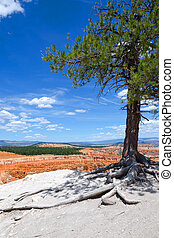 Bryce Canyon - landscape in Bryce Canyon National Park in...