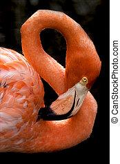 pink flamengo in republica dominicana - pink flamengo whit...