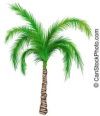 Palm A01 - isolated hand drawn illustration as retouch