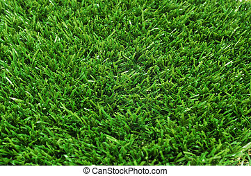 grass - closeup of green grass
