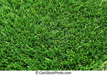 grass - closeup of green grass
