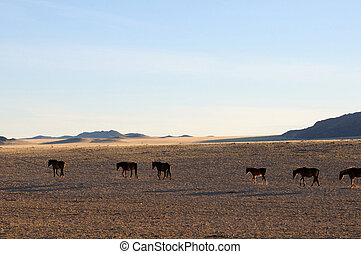 Wild horses of the Namib - Wild Horses of the Namib near...