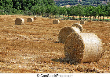 Packed roll of hay on a field - Some packed roll of hay in a...