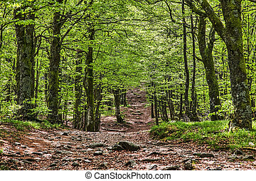 Footpath in a Beautiful Green Forest - Beautiful footpath in...