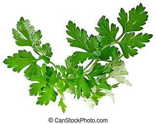 Fresh herbs parsley - isolated on white background