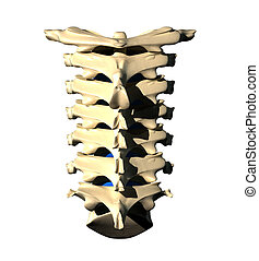 Cervical Spine - Back view - Cervical Spine - Posterior view...