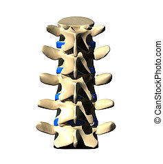 Lumbar Spine - Back view - Lumbar Spine - Posterior view -...