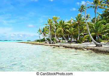 Coconut palms on a pacific island