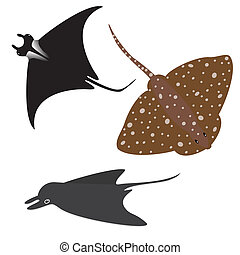 Stingray vector set - Collection of vector stingrays...