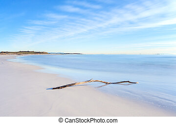 Wood branch on a white beach on sunset time