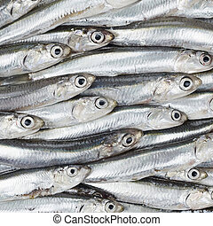 Fresh anchovies prepared seafood background texture. Raw...