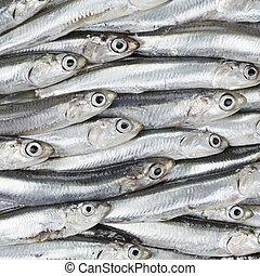 frais, anchois, préparé, fruits mer, fond,...