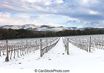 Vineyards rows covered by snow in winter. Chianti, Florence,...