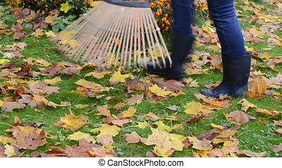 rake autumn leaves - closeup of woman in rubber boots and...