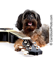 Doggie and guitar. - Musical instrument. Small doggie....