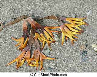 Funny looking seaweed - Very strange and funny looking...