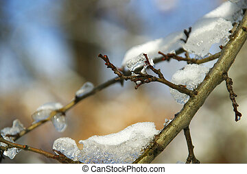 Ice on the branches - Frozen ice on the branches melts in...