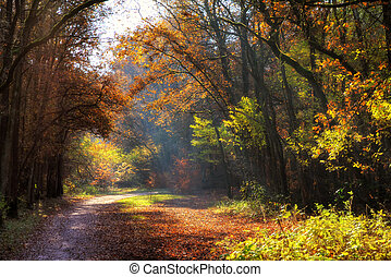 Autmn forest path - Beautiful autumn colors in a dreamy...