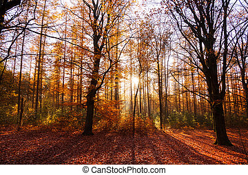 Red autumn - Beautiful sun burst in autumn in het...
