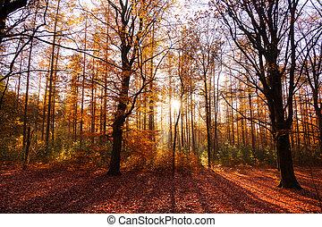 Red autumn - Beautiful sun burst in autumn in 'het...