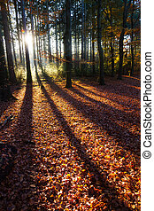 Autumn shadow light - Beautiful shadows in autumn in het...