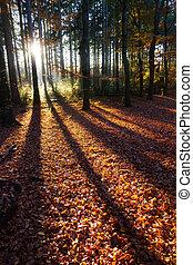 Autumn shadow light - Beautiful shadows in autumn in 'het...
