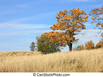Autumn landscape with field, tree and blue sky