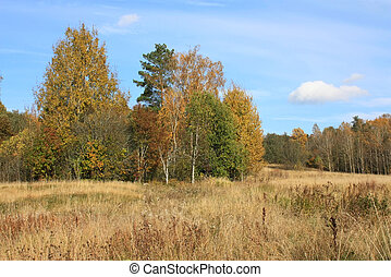 Autumn - Wild autumn landscape with trees, a field and blue...