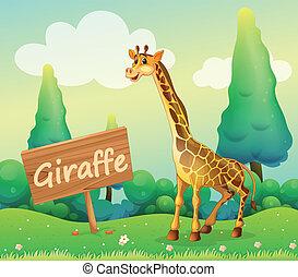 A wooden signboard beside a giraffe