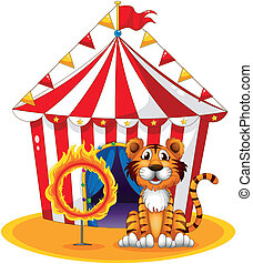A circus tent at the back of the tiger and the ring of fire...
