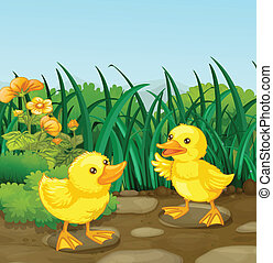 Two little ducks in the garden - Illustration of the two...