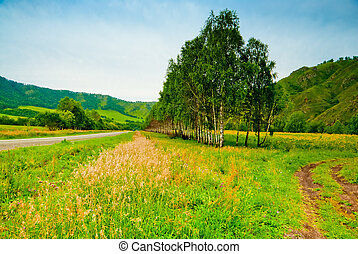 Rural landscape with birch trees planted along the road. Altai Mountains.