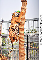 Tiger trainning - Tigers, like children and dogs, can be...
