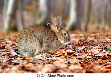 cute rabbit in the forest - little rabbit standing on the...