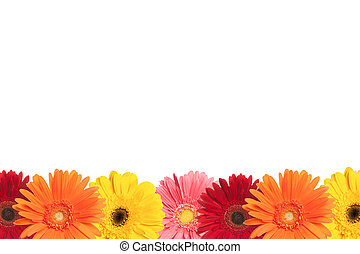 Colorful Daisy Border