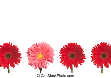 Stand out Daisy: Red and PInk - One pink daisy stands out...