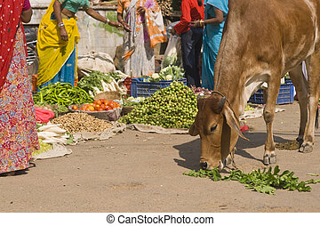 Indian Street Scene - Indian street scene. Cow eating...