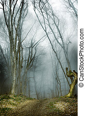dark forest with fog and cold light