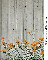 orange flowers in front of a wall