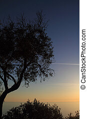 Silhouette of olive tree against sunset
