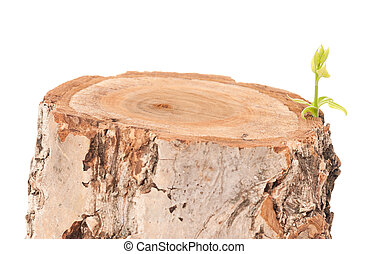 Tree stump and green leaf on white background