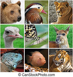 animals from zoo - collage with animals from zoo