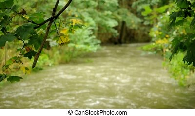 River with kayak - View to the rushing brook through branch...