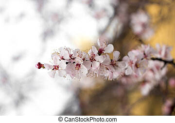 flower on a tree in spring